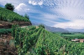 The 5 Lands U2013 Cinque Terre U2013 July 4th To July 7th 2017 U2013 Just A by Cabernet Sauvignon Quentin Sadler U0027s Wine Page