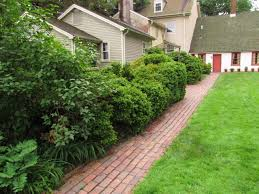 Backyard Trees Landscaping Ideas Landscape Design Idea For Privacy Davey Blog