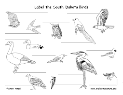 South Dakota birds images South dakota habitats mammals birds amphibians reptiles jpg