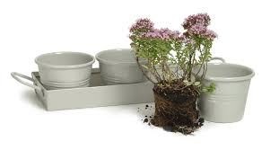 Kitchen Herb Pots by Garden Trading Pots On A Tray In Clay Set Of 3 Amazon Co Uk
