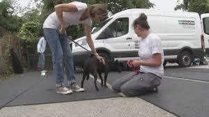 pet adoption 6abc com