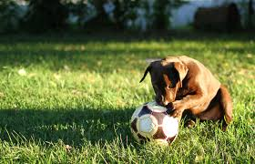 naturally prevent ticks and fleas from your yard bark with it
