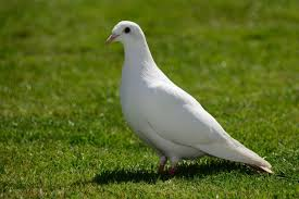 birds images 10 essential facts to help you understand birds jpg