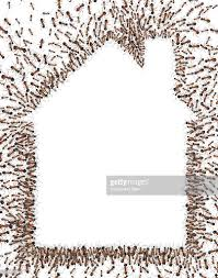 house outline ants in the outline of a house stock illustration getty images