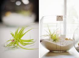 gift idea diy air plant terrarium mstetson design