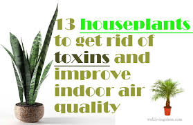best plants for air quality 13 best houseplants to get rid of toxins and improve indoor air quality