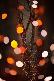 christmas tree flower lights wallpaper japan night red branch christmas tree circle nikon