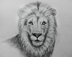 lion drawing by hobbspot on deviantart