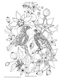 two birds animals coloring pages for adults justcolor