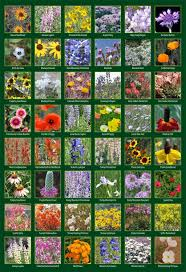rocky mountain native plants stevenson intermountain seed wildflower seed mixtures