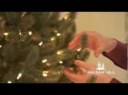 balsam hill ceo thomas harman fluffs vermont white spruce