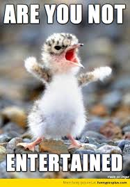 Angry Birds Memes - birds tweet are you not entertained funny pictures