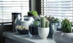 plantes pour bureau des fleurs et des plantes pour décorer bureau professionnel je