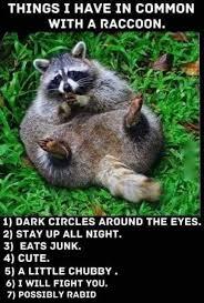Panda Meme - trash panda meme by marialovesjeremy memedroid