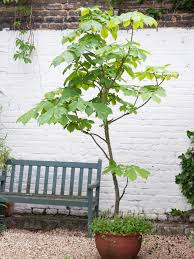 grow trees from seeds hgtv