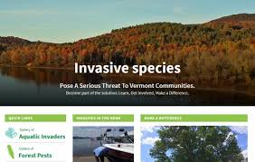 Vermont forest images Vermont urban and community forestry cultivating connections to jpg