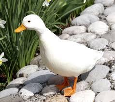 call duck modern farming methods