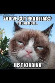 103 best grumpy cat images on pinterest grumpy cat grumpy cat