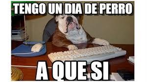 Memes De Facebook - d祗a mundial del perro peruanos lo celebran con divertidos memes