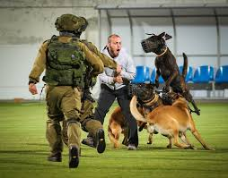 belgian malinois police 4 israeli special forces dogs simultaneous attack the bad guy