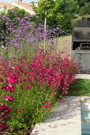 49 best california native plants 49 best penstemon images on pinterest gardens perennials and plants