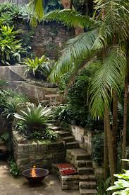 13 best eetbare tropische planten edible tropical plants images