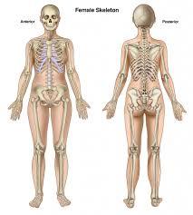 Anatomy Of Human Body Bones Bone Structure In Human Body Bones Structure Of Human Body Human
