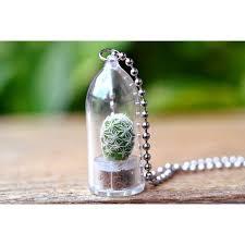 snowball cactus live plant necklace cactus terrarium gift