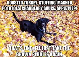 9 dogs that look like thanksgiving dinner rover