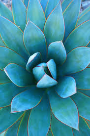 turquoise flowers 358 best plants nature images on paintings