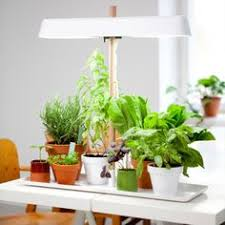 grow lights for indoor herb garden urban grow lights indoor farming grow lights and led grow lights