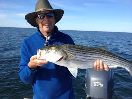 chasing birds striped bass on cape cod new england on the