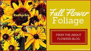 fsn fall flower foliage jpg