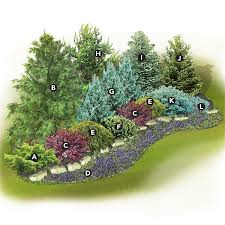 Small Shrubs For Front Yard - low maintenance u0026 bird friendly evergreen screen a juniperus x