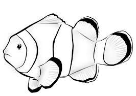 fish color kindergarten kiddo shelter