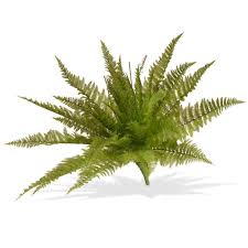 Fern Decor by Fern Indoor Plants Garden Plants U0026 Flowers The Home Depot
