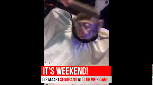 monkey gets haircut at the local barber youtube