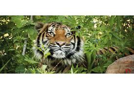 100 jungle wall mural best 25 3d wall murals ideas on mural tiger in the jungle wallpapers mural tiger in the jungle
