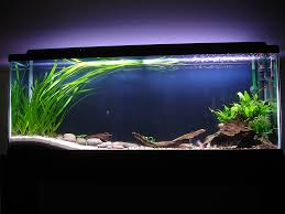 Best Substrate For Aquascaping Minimal Plants Different Levels Of Substrate Negative Space