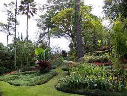 Botanical Gardens Images by Wilson Botanical Gardens Go Visit Costa Rica