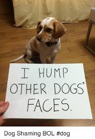 Dog Shaming Meme - i hump other dogs faces dog shaming bol dog meme on me me