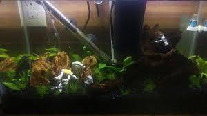 pin by justin stubbs on wars fish tank fish tanks