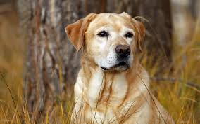 Dog Wallpapers Mobile Hunting Dog Pictures High Quality
