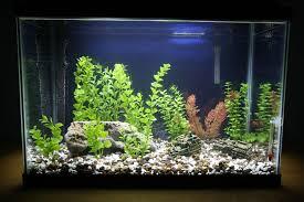 aquarium tank decorations