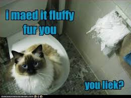 Newspaper Cat Meme - 9 best animals in the bathroom images on pinterest bathrooms