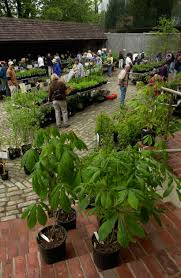 native plant sale seed program brandywine conservancy and museum of art