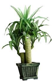 plante verte dans une chambre plante verte de chambre photo stock image du affichage 4660758