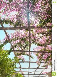 Photos De Pergola Door De Pergola Met Bloemen Glanst De Zon Italië Stock Foto