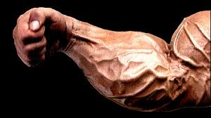 Best Forearm - the best forearm exercise t nation
