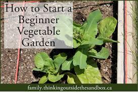 how to start a beginner vegetable garden aimed at the heart best